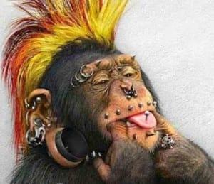gambar dp bbm sinpanse lucu