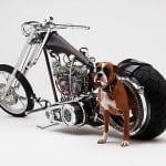 DP BBM Harley Davidson Keren  Unik dan Terbaru Android Gratis