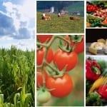 Aplikasi Pertanian Android Terbaik dan Terbaru Gratis