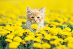 Dp bbm kucing cantik