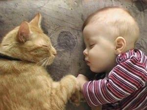Dp bbm kucing dan anak lucu