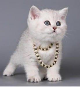Dp bbm kucing imut