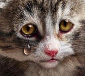 Dp bbm kucing lagi sedih