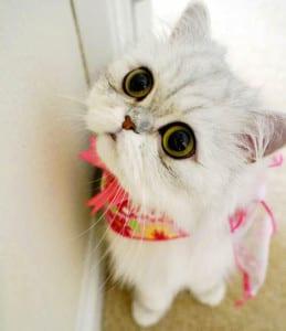 Dp bbm kucing lucu banget