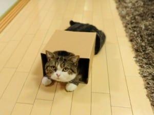 Dp bbm kucing lucu gokil