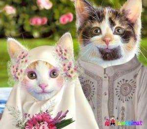 Dp bbm kucing lucu imut