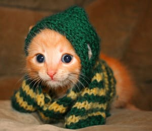 Dp bbm kucing lucu imut terbaru