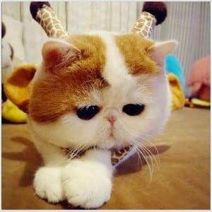 Dp bbm kucing lucu menggemaskan