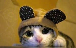 Dp bbm kucing lucu terbaru