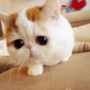 Dp bbm kucing paling imut