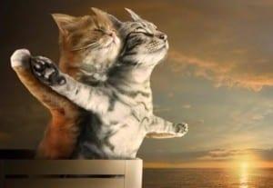 Dp bbm kucing paling lucu