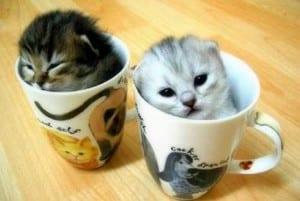 Dp bbm kucing super lucu