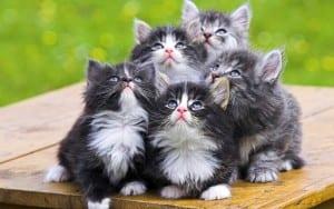 Dp bbm kumpulan kucing imut