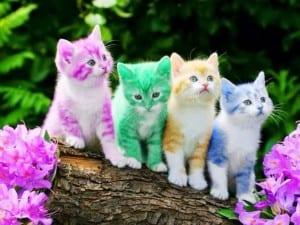 Dp bbm kumpulan kucing lucu