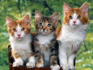 Dp bbm kumpulan kucing lucu terbaru