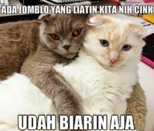 Dp bbm meme kucing lucu
