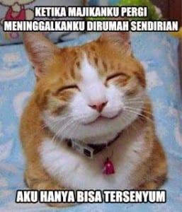 Dp bbm meme kucing paling lucu