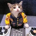 Gambar kucing nge DJ