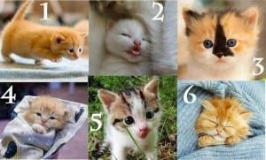Kumpulan kucing lucu
