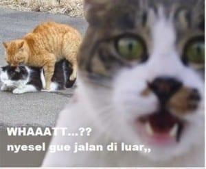 Meme kucing lucu