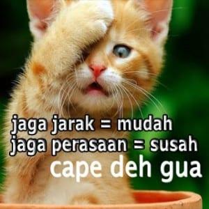 Meme kucing lucu banget