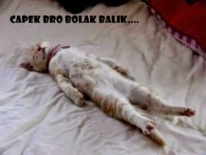 Meme kucing lucu terbaru