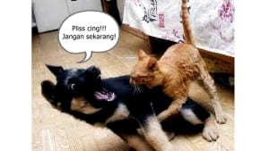 Tingkah laku kucing lucu gokil