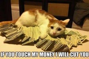 Tingkah laku kucing lucu terbaru