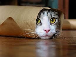 Tingkah laku kucing super lucu