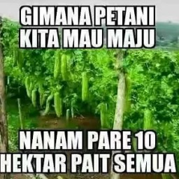 Meme bahasa jawa lucu