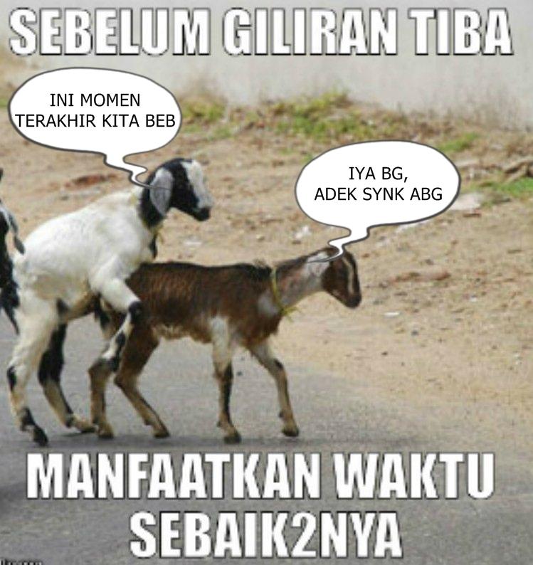 Meme Lucu Idul Adha Nusagates