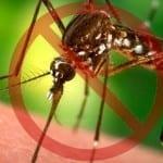 Kumpulan Aplikasi Pengusir Nyamuk Paling Efektif