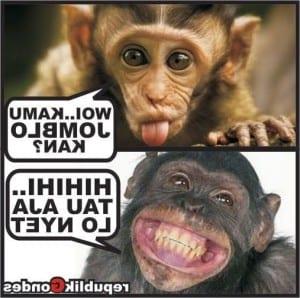 meme jomblo kocak buat dp bbm fb cerita humor lucu kocak gokil inside Gambar Monyet Komentar Fb Gambar Monyet Komentar Fb Mengenai Menyegarkan - Gambar88