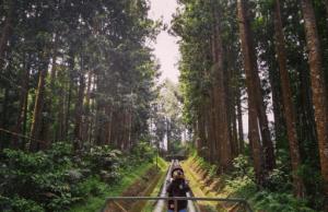 Wisata Alam Baturaden Adventure Forest (Hutan Pinus Purwokerto)