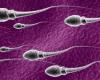 50 Manfaat Air Mani Sperma Pria bagi Kesehatan