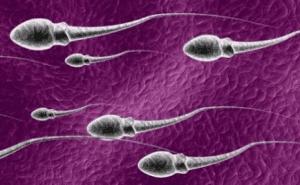 Manfaat Sperma Pria Bagi Kesehatan